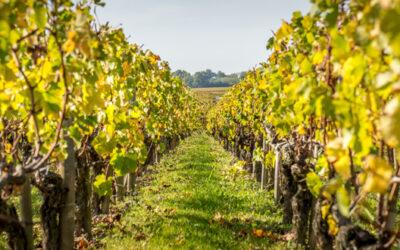 Des vignes à Ferrières-Haut-Clocher!